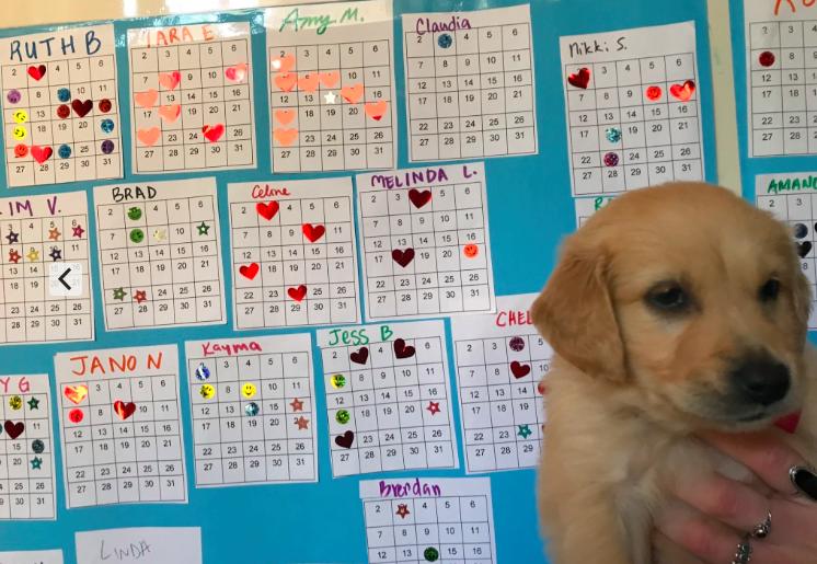 Bingo boards and puppy