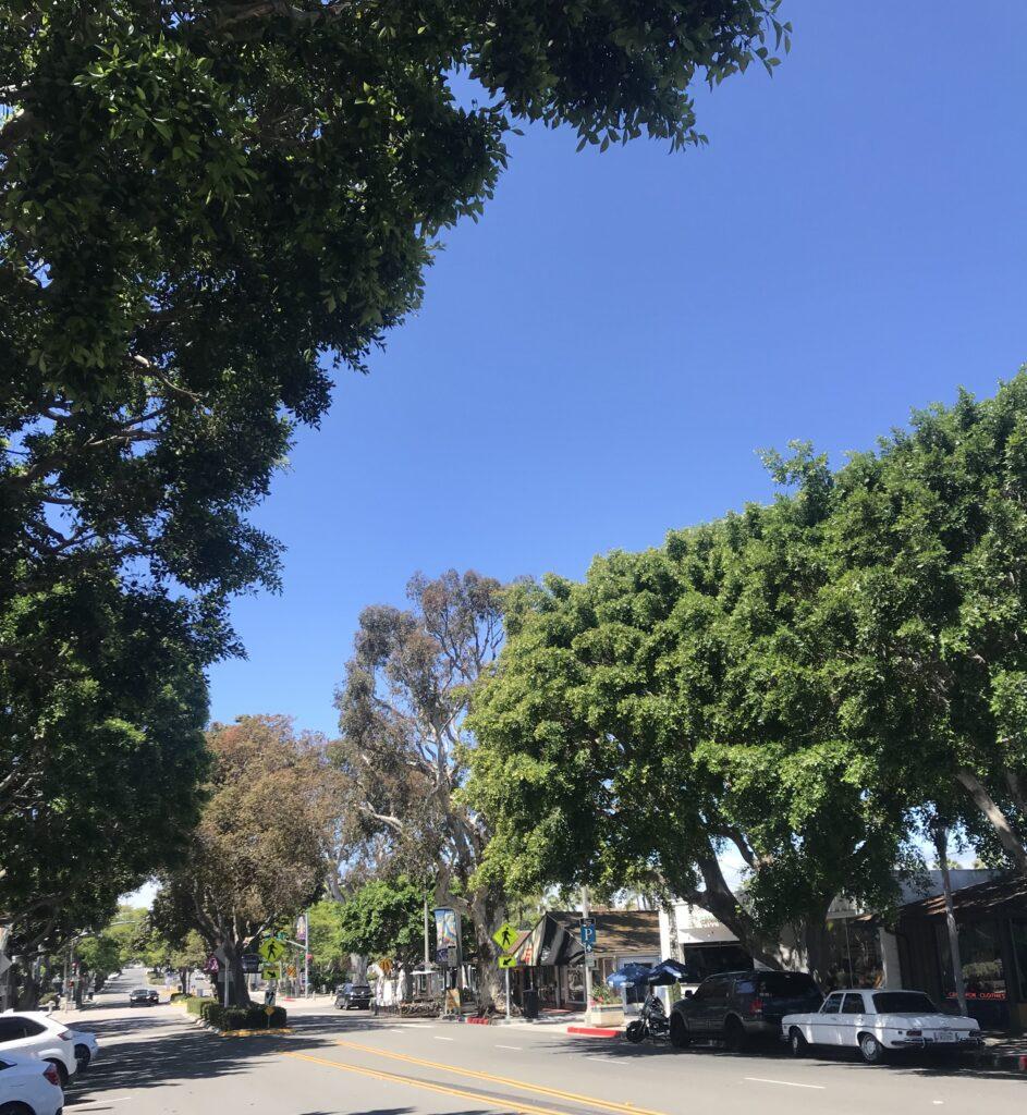 carlsbad trees